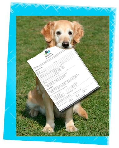 New Client Forms For Daytime Dogs And Friends